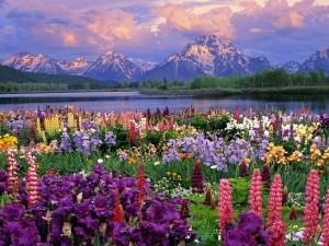 spring-flowers-pictures